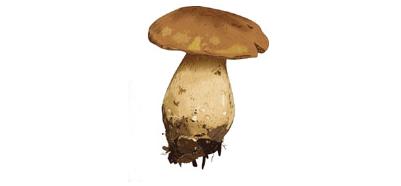 Couteaux à champignons